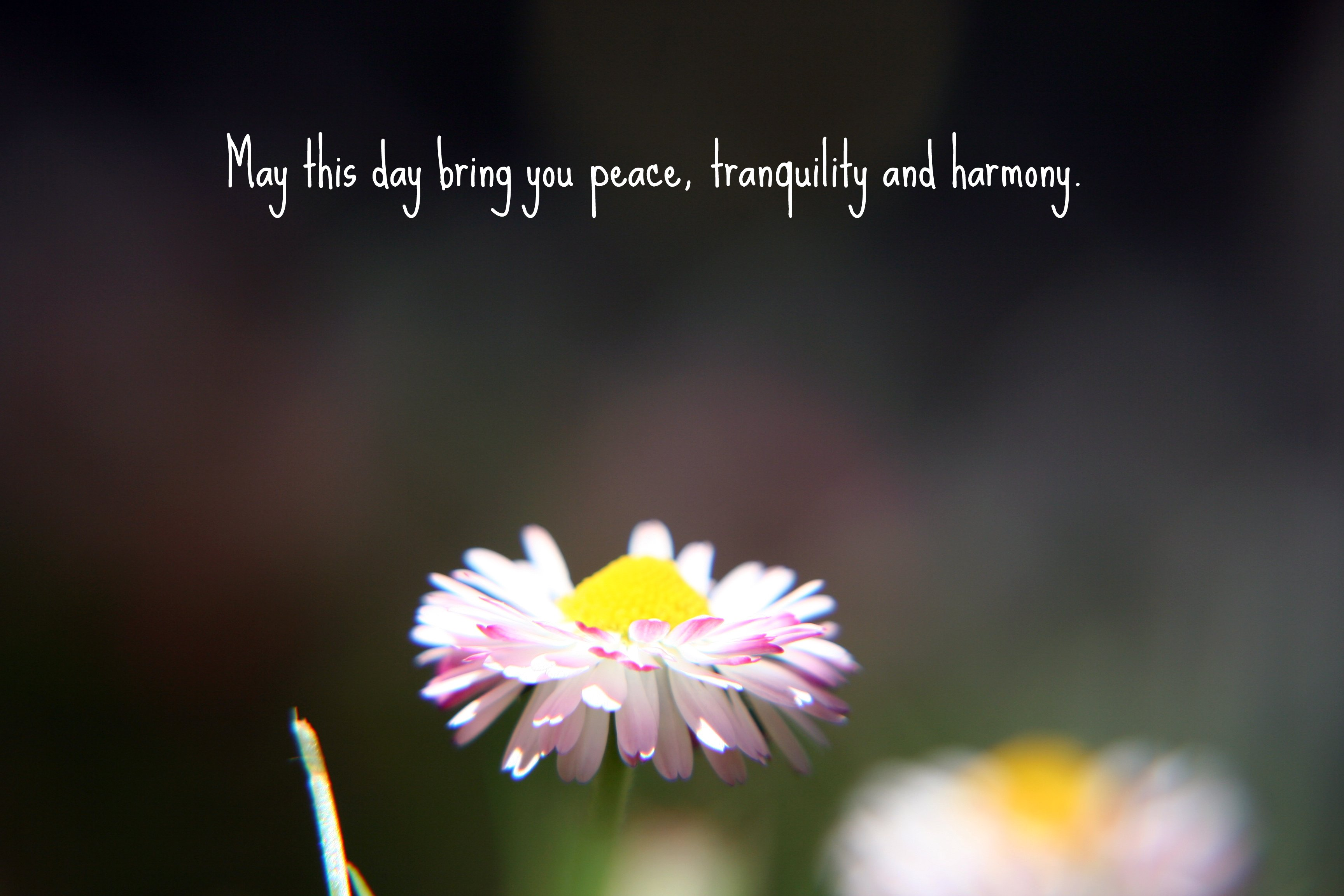 Keywords peace and harmony and Tags